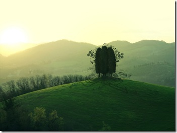 trees-on-hill-top-wallpapers